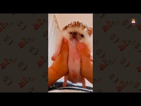 Animal are Funny & Adorable 2018 # 1