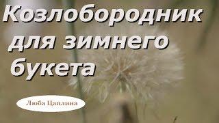 видео Цветы для зимнего букета