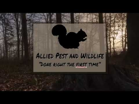 Critter Removal Services in Tualatin OR, Allied Pest and Wildlife