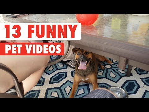 13 Funny Pets | Funny Pet Video Compilation 2017