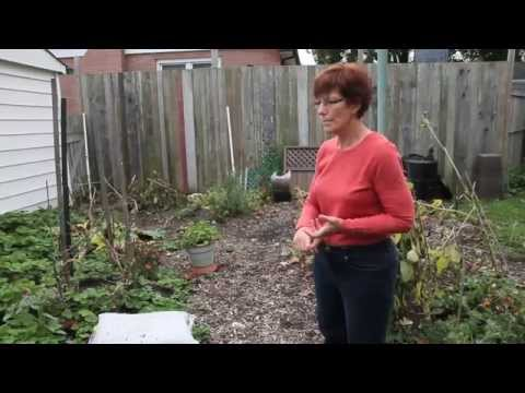 The Rise of Urban Agriculture in London Ontario