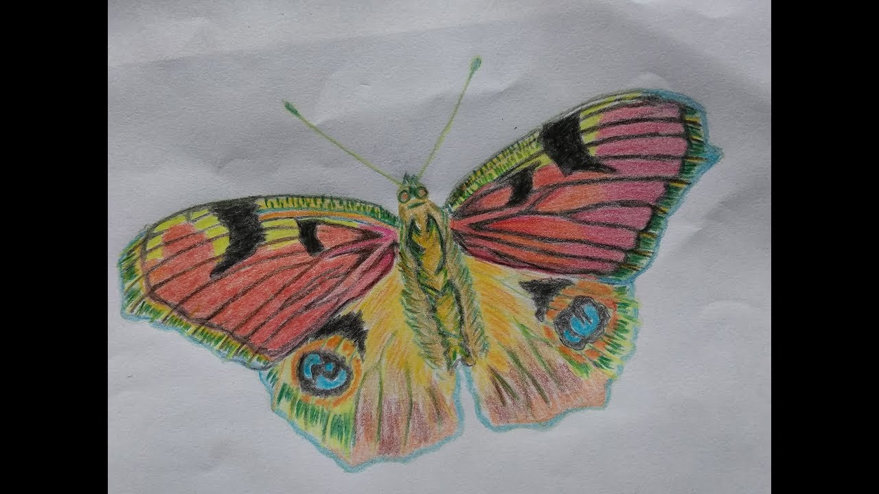 butterfly drawing easy methods how to draw butterflies - 1280×720