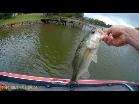 Fluke Fishing For Bass On Lake Wylie Nc