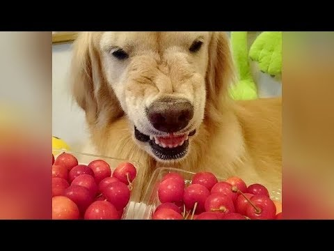 PREPARE to DIE FROM LAUGHING! - Collection of the BEST ANIMAL VIDEOS