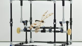Lego insect manipulator stop motion | Natural History Museum