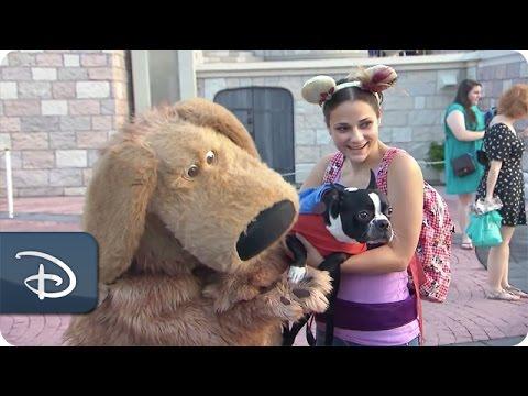 Dog's Day at Magic Kingdom Park   Walt Disney World