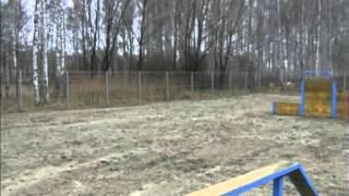 Во Фрунзенском районе Ярославля открылась площадка для собак