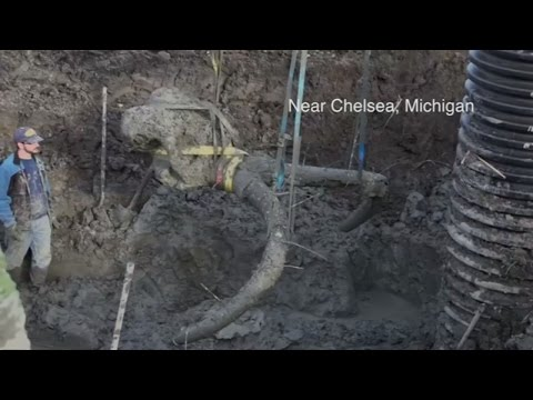 Woolly mammoth skeleton dug up by farmer