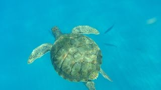 Bridgetown, Barbados Excursion: Swimming with Turtles on a Catamaran