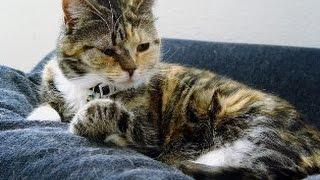 How to housebreak your cat