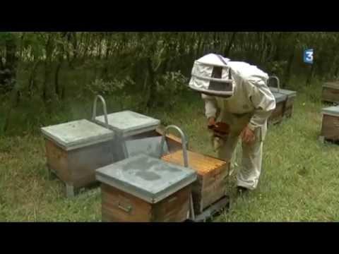 difficultés des apiculteurs en Lot et Garonne