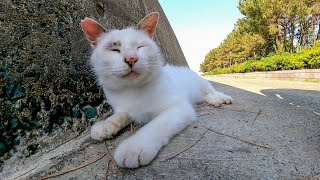 防波堤で寝ている野良猫を撫でるとゴロゴロ喉を鳴らしてカワイイ
