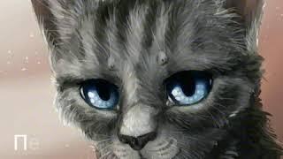 Коты-Воители имена часть 1