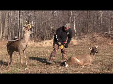 For Better Deer Hunting, Learn How to Go Undetected