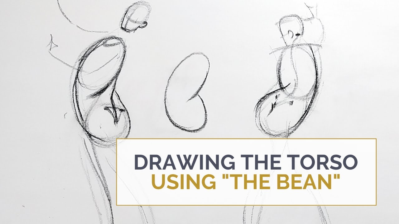 """Drawing The Torso Using the """"Bean"""""""
