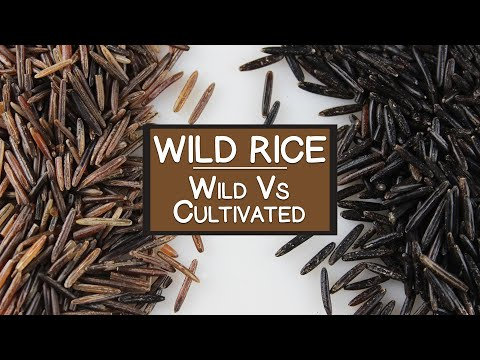 "Nutritional Benefits of Wild Rice, A ""Wild"" and Cultivated Grain Alternative"