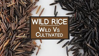 """Nutritional Benefits of Wild Rice, A """"Wild"""" and Cultivated Grain Alternative"""