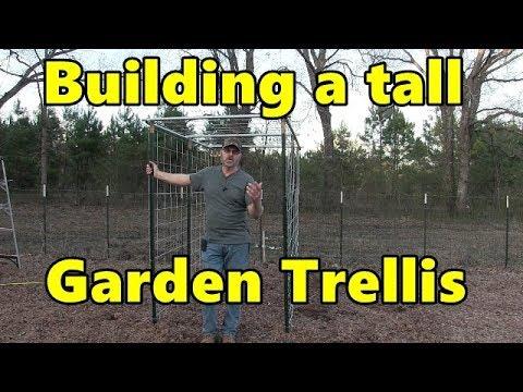 Building A Tall Cattle Panel Garden Trellis