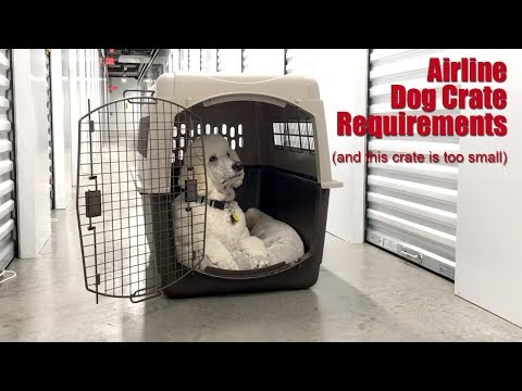 Airlines And Dog Crate Sizing