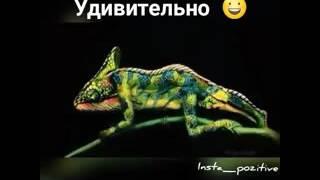 Люди изображают животных