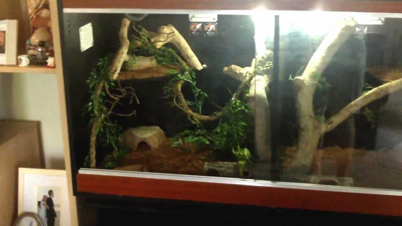 Jungle Carpet Python Mate NEW Enclosure YouTube