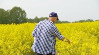 Farmer Using Digital Tablet Examining Rape Blossom on Field   Stock Footage - Videohive