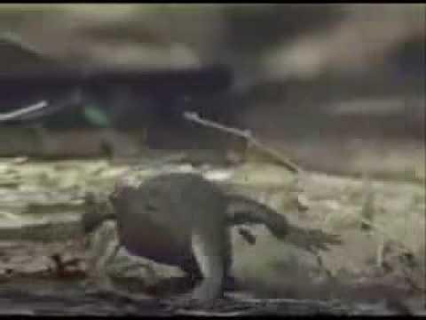 Interior Crocodile Alligator (w/ Lyrics)