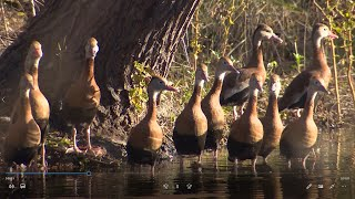 Moment of Zen: Birds of Brazos Bend State Park