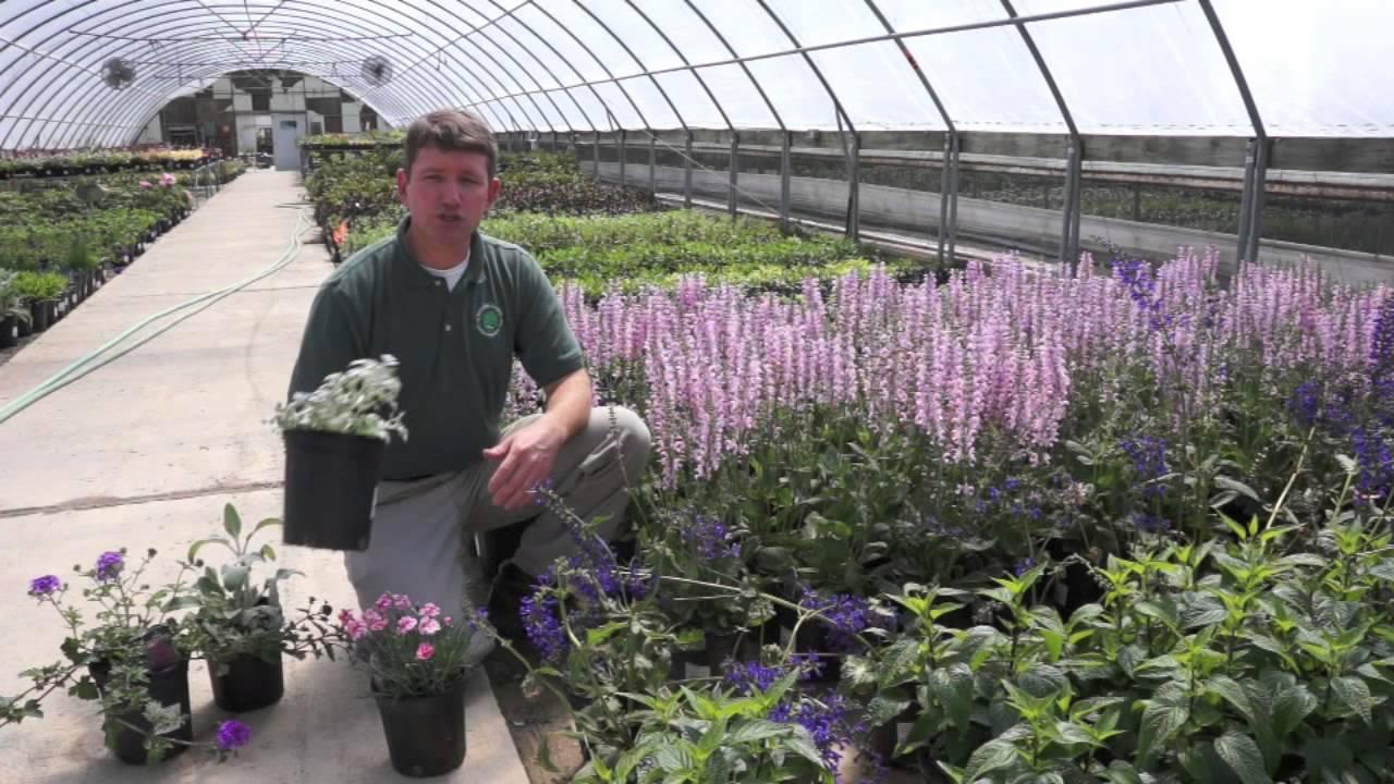 Annuals Vs Perennials Youtube