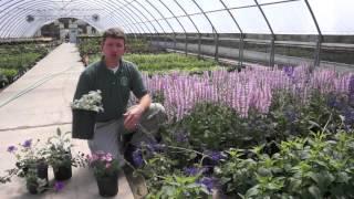 Annuals vs. Perennials