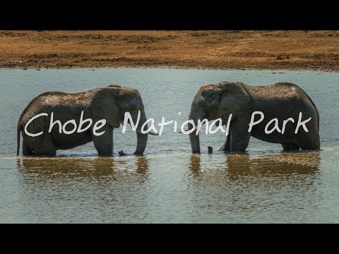 How to get close to elephants( Underground Hide) - Vlog 034