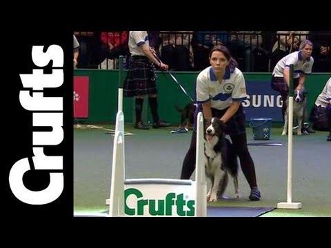 Flyball - Team - Semi Final - Crufts 2012