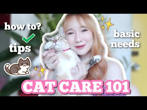 CAT CARE 101: HOW TO TAKE CARE OF CATS (SUPPLIES, NEEDS, GROOMING, TIPS)