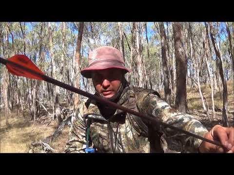 Bowhunting Fallow Deer