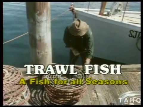 A Fish For All Seasons - Trawl Fish (1982)