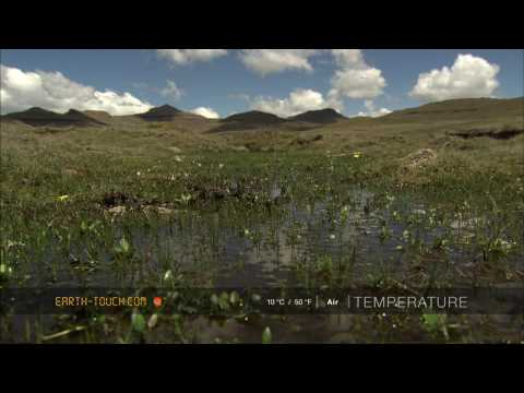 Frogs emerge as spring arrives in Lesotho