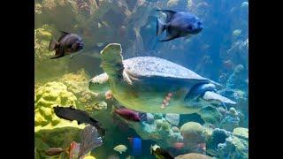 WMCT-TV Magazine - The New England Aquarium