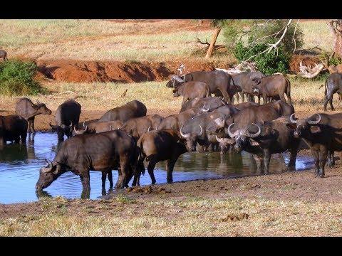 Tsavo West National Park, Kenia (foto)