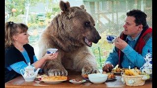 Знакомься, это Степан  Ему 25, он играет в кино, любит папу и маму, а еще он медведь…