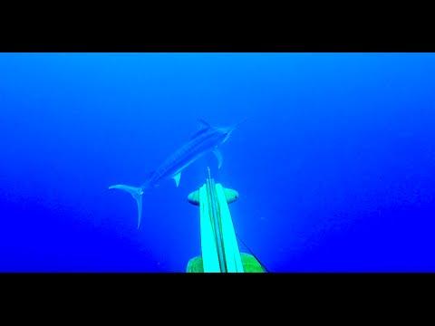 BLUE WATER SPEARFISHING - NEW CALEDONIA - Part 1