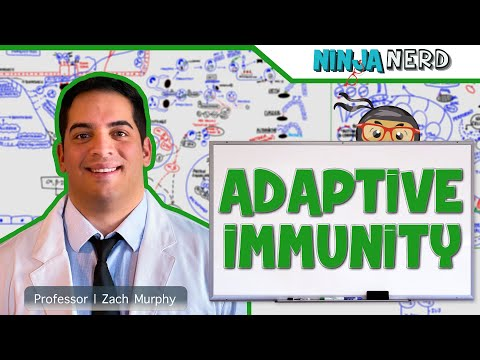 Immunology | Adaptive Immunity