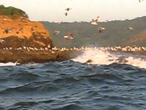 Seagull Island at Suvarnadurg fort