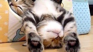 Funny baby kittens - Смешные кошки, котята 13 - 2013-2014