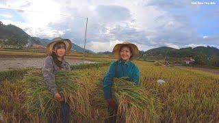 Một Ngày Cùng Em Lan Lên Giúp Em Ngân Gặt Lúa | Hoa Ban Tây Bắc