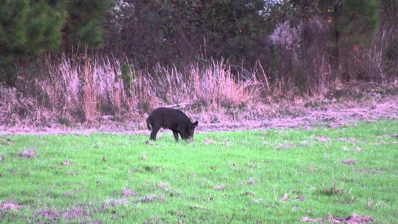 7mm rem mag vs hog youtube for Old ben franklin motors oak ridge