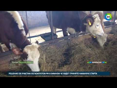 Молочные реки, бумажные берега: как бюрократия топит российских фермеров