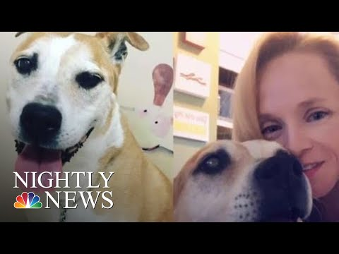 grieving-pet-owners-say-dog-food-recall-came-too-late-|-nbc-nightly-news