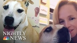 Grieving Pet Owners Say Dog Food Recall Came Too Late | NBC Nightly News
