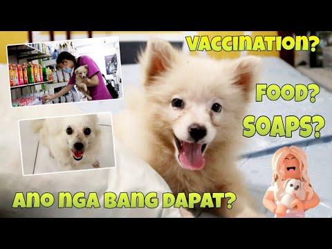 Japanese spitz dogs (vaccination, soaps, food)   Philippines   WongyandDani