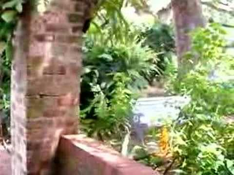 Scenes from the New Orleans LA Botanical Garden at City Park - YouTube